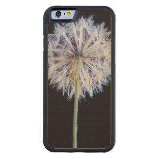 Dandelion (Taraxacum Officinale) Seed Head Maple iPhone 6 Bumper Case