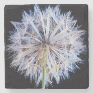 Dandelion (Taraxacum Officinale) Seed Head Stone Beverage Coaster