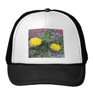 Dandelion Will Make You Wise Cap