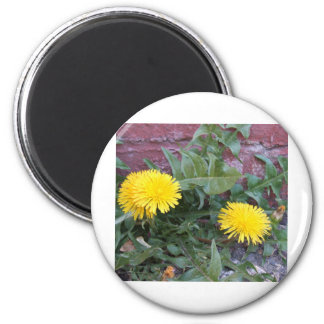 Dandelion Will Make You Wise Magnet