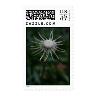 Dandelion with no petals on a postage stamp