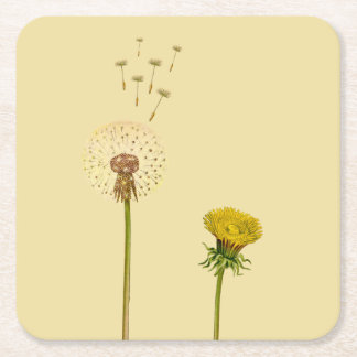 Dandelion, yellow flowers, blowballs, clocks square paper coaster