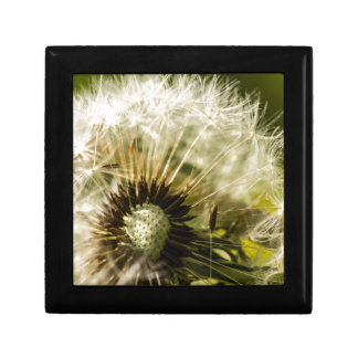 Dandelions For All Small Square Gift Box
