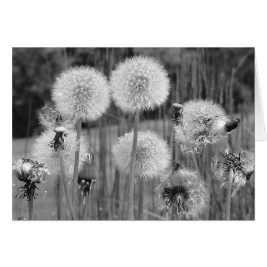 Dandelions in Black and White Card