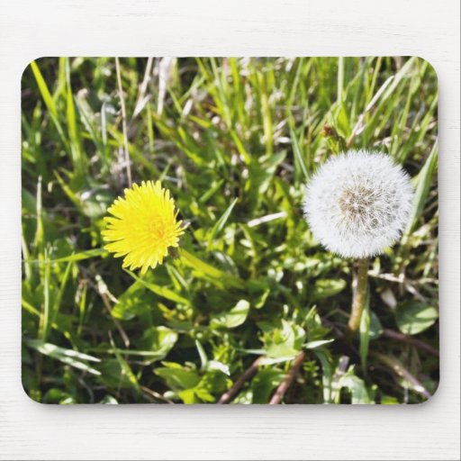 Dandelions On The Meadow Mouse Pad