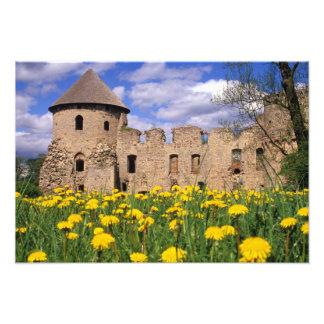 Dandelions surround Cesis Castle in central Photo