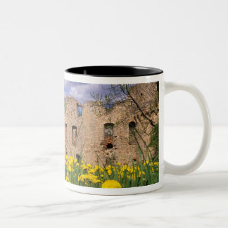 Dandelions surround Cesis Castle in central Two-Tone Coffee Mug