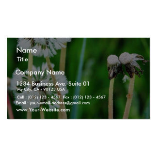 Dandelions White In Green Grass Business Card Template