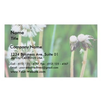 Dandelions White In Green Grass Business Cards