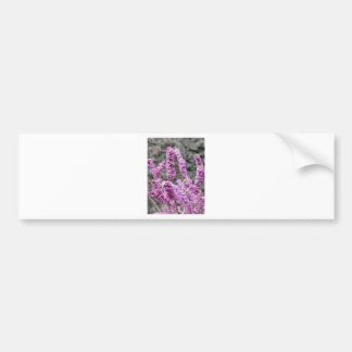Daphne Blossoms Bumper Stickers