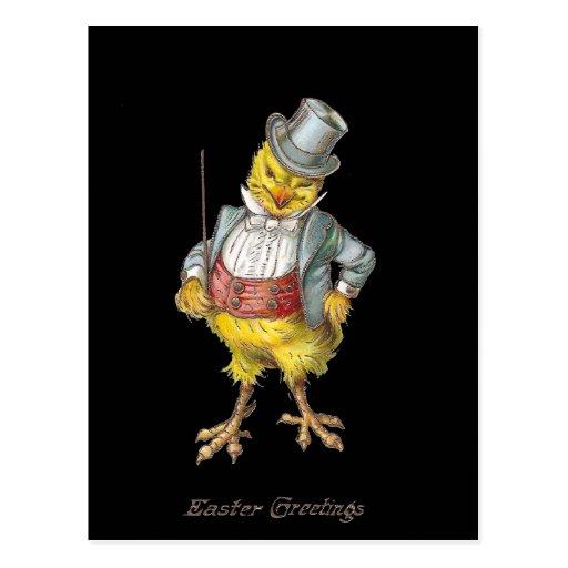Dapper Chick Vintage Easter Postcard Postcards