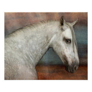 Dapple Gray Andalusian Horse Portrait Poster