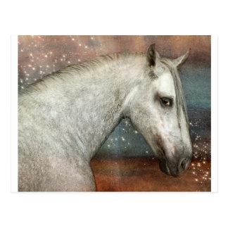 Dapple Pony in Sunset Postcard
