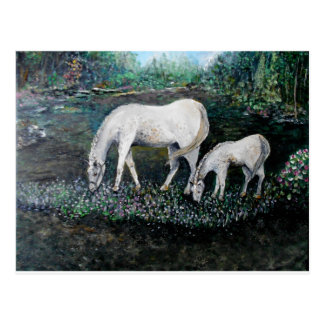 Dappled Mare and Foal Postcard