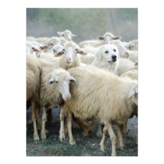 Dare to be different Sheepdog Saying Photo Art