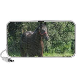 Dark Bay Horse Speakers