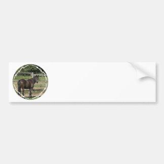 Dark Bay Thoroughbred Bumper Sticker