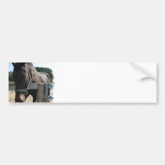 Dark Bay Thoroughbred Horse Bumper Stickers