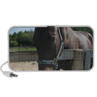 Dark Bay Thoroughbred Horse Speakers