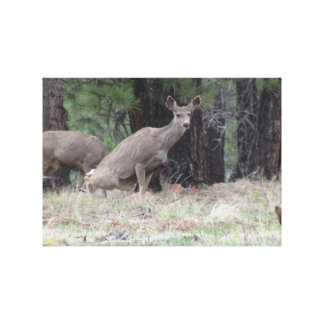 Dark Canyon Utah Mammals Deer Canvas Prints