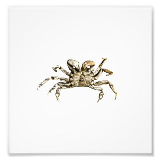 Dark Crab Photo