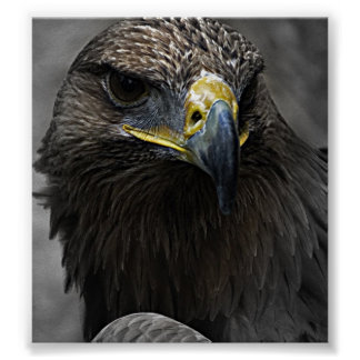 Dark Eagle Print