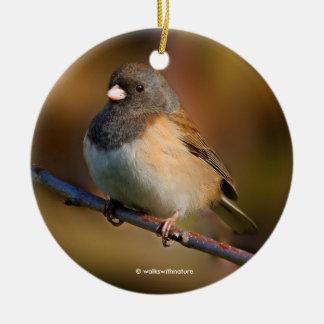 Dark-Eyed Junco on a Limb Christmas Ornament
