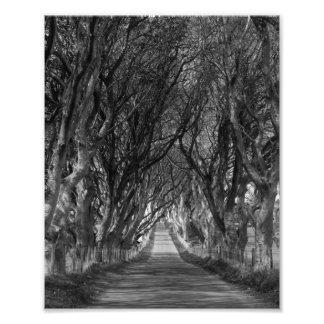 dark hedges distance photograph