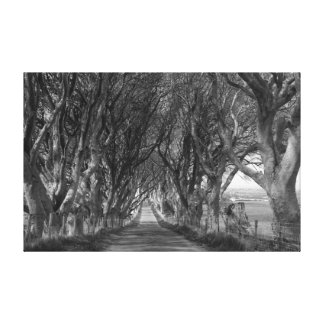 Dark Hedges in Black and White Gallery Wrapped Canvas