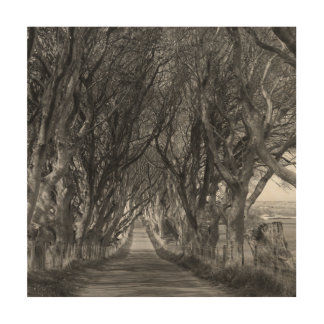 Dark Hedges Wood Canvases