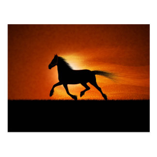 Dark Horse Against An Orange Sky Postcard