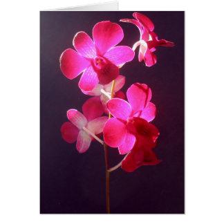 Dark magenta/ Purple Dendrobium orchid  card