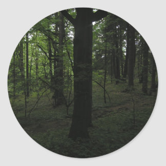 Dark mysticalforest in mid-day classic round sticker