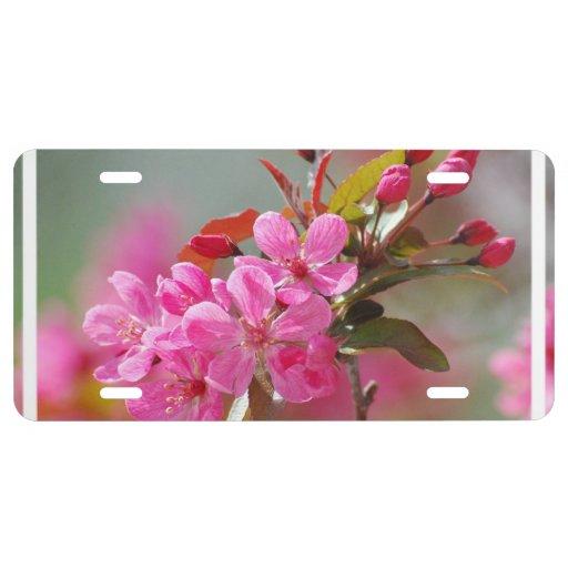 Dark Pink Cherry Blossoms License Plate