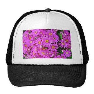 Dark Pink Chrysanthemums flowers Hat