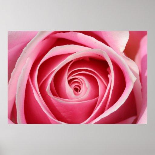 Dark Pink Rose 01 Poster