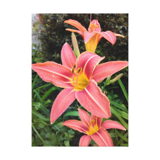 Dark Pink Tiger Lilies Canvas Print