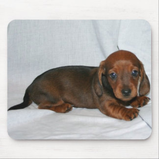 Dark Red Dachshund Puppy Mouse Pad