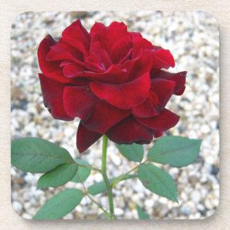 Dark Red Rose Beverage Coasters