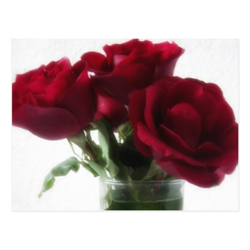 Dark Red Roses in Glass 2 Post Cards