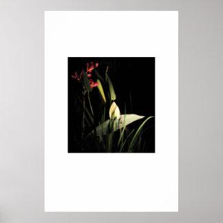 dark wetland poster