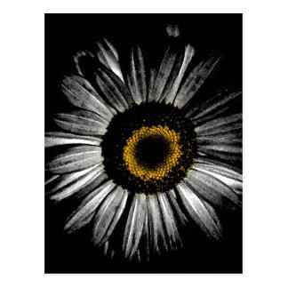 Darkroom Daisy Postcard
