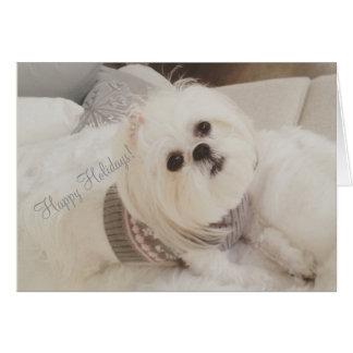 Darling Ava White Shih Tzu puppy Christmas card
