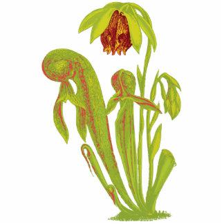 Darlingtonia californica, Carnivorous Plant Standing Photo Sculpture