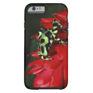Dart frog 2 tough iPhone 6 case
