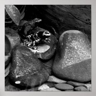 Dart Frog Friends B+W Posters
