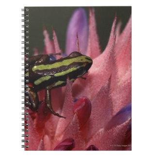 Dart frog notebook