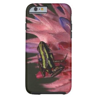 Dart frog tough iPhone 6 case