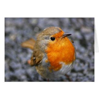 'Dartmeet Robin' Card