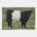 Dartmoor Belted Galloway Calf Kitchen Towel